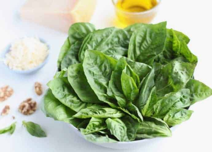A white bowl filled with basil leaves, surrounded by parmesan cheese, walnuts and olive oil